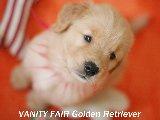 Golden Baby's 5