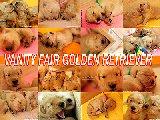 GOLDEN Baby's 7