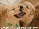 Golden Baby's 4