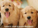 Golden Baby's 6