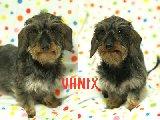 VANIX -2-